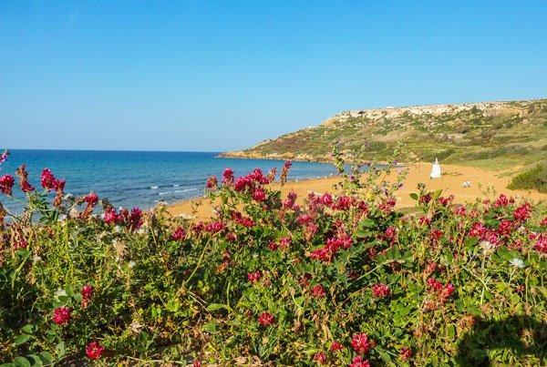baai van ramla ramla bay bloemetjes en strand gozo eiland