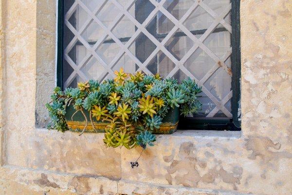 bloemstukje op vensterbank in de straten van mdina malta