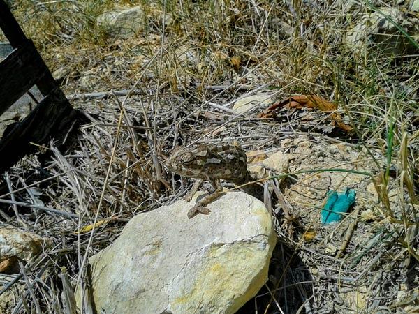 dwejra lines wandeling kameleon malta activiteiten