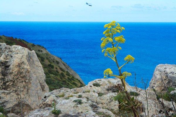 kliffen venkel gozo eiland maltese eilanden