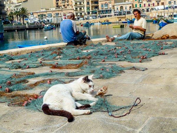 vissers netten kat spinola bay malta st julians