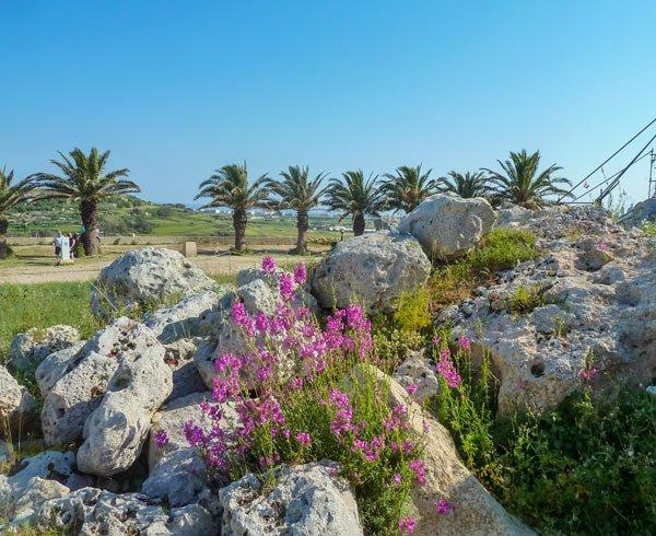 ggantija tempels in xaghra uitzicht palmbomen gozo eiland