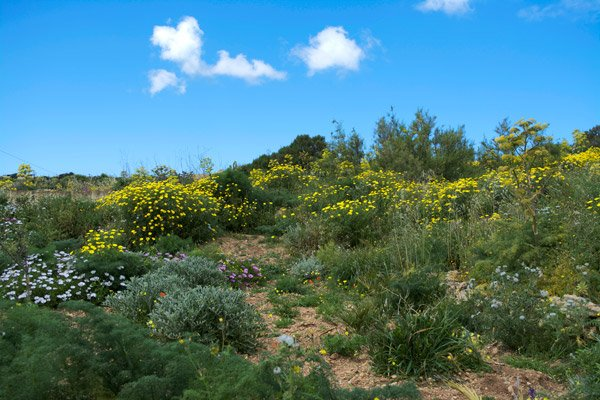 kleurrijke bloemen landschap gozo eiland malta