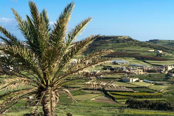 landschap met palmboom gozo eiland malta