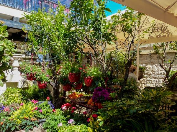 prachtige bloemen en planten binnenplaats fontanella tea garden mdina malta