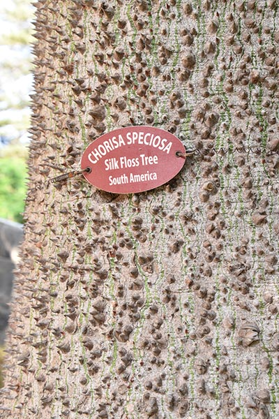 speciale zuid amerikaanse boom met stekelige schors in de san anton tuinen te malta