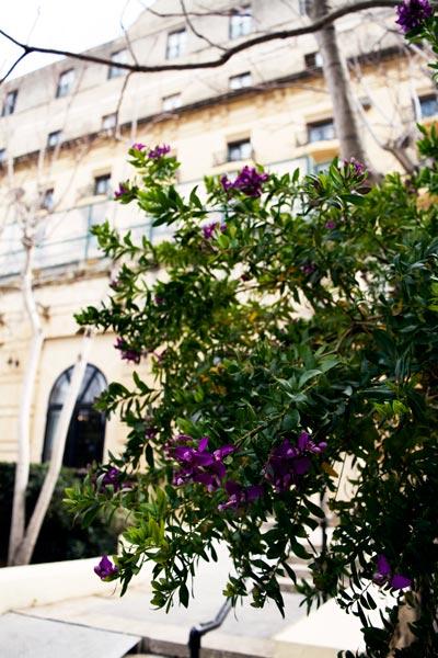 flowers garden phoenicia hotel valletta malta