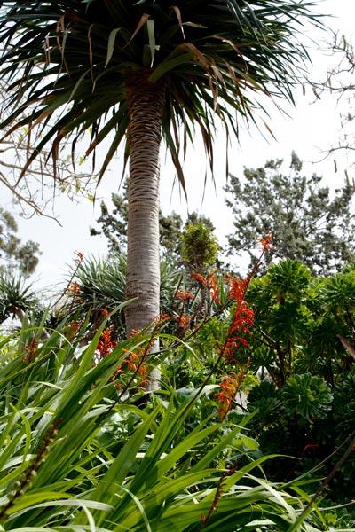 vegetation gardens hotel phoenicia valletta malta