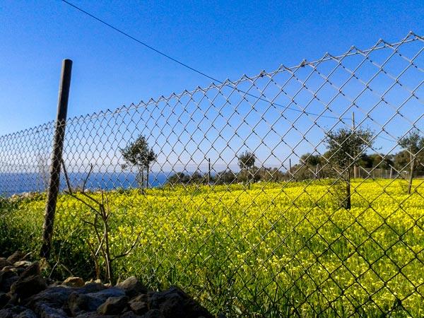 weer malta februari 2016 zonovergoten veld bloemen aan zee wandeling namiddag fawwara siggiewi