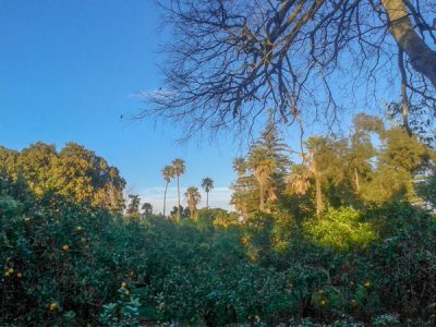 weer malta januari 2016 wandeling namiddag park sinaasappelen palmbomen san anton gardens tuinen attard