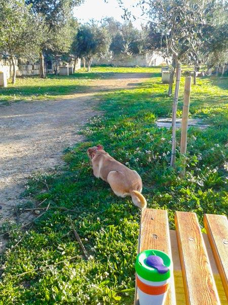 weer malta januari 2016 wandeling park hond koffie ochtendgloren