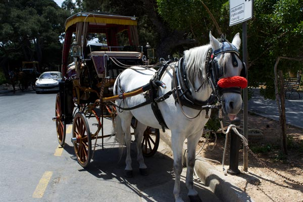 romantisch tochtje met paard en kar in mdina malta