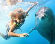 zwemmen met dolfijnen in malta