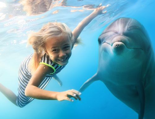 Zwemmen met dolfijnen in Malta: Een unieke ervaring voor jong en oud!